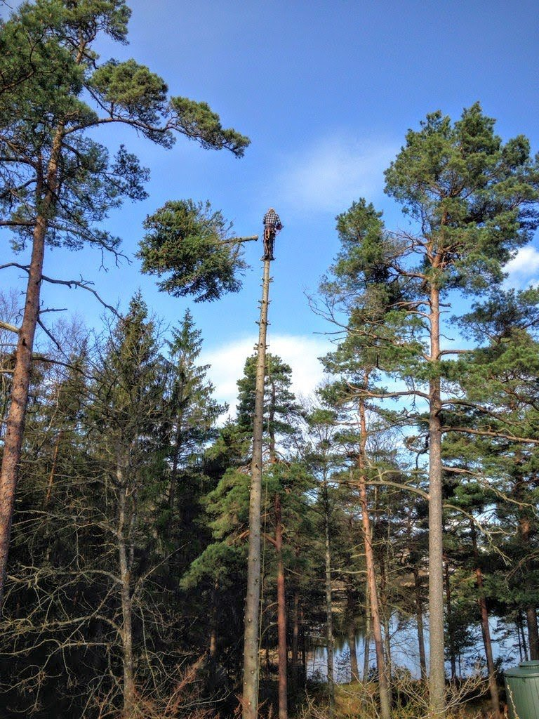 Trädfällning & Trädbeskärning