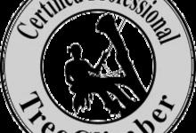 Certified Professional Treeclimber