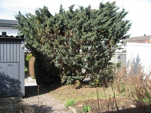 Bild för uppdrag: Fälla 2 st träd i Järfälla