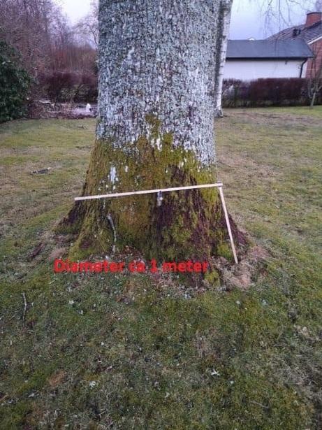 Bild för uppdrag: Fällning av 1 st ek och större björk i Tyringe
