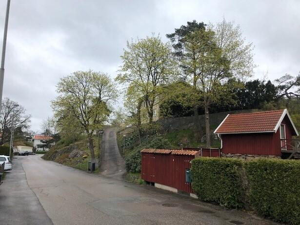 Bild för uppdrag: Fällning och bortforsling av en hög tall  i Trollhättan, Strömslund
