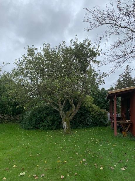 Bild för uppdrag: Trädbeskärning/-fällning i Varberg