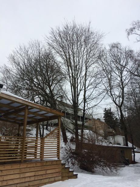 Bild för uppdrag: Trädfällning av 3 st träd eller mer i Sollentuna, 2/5